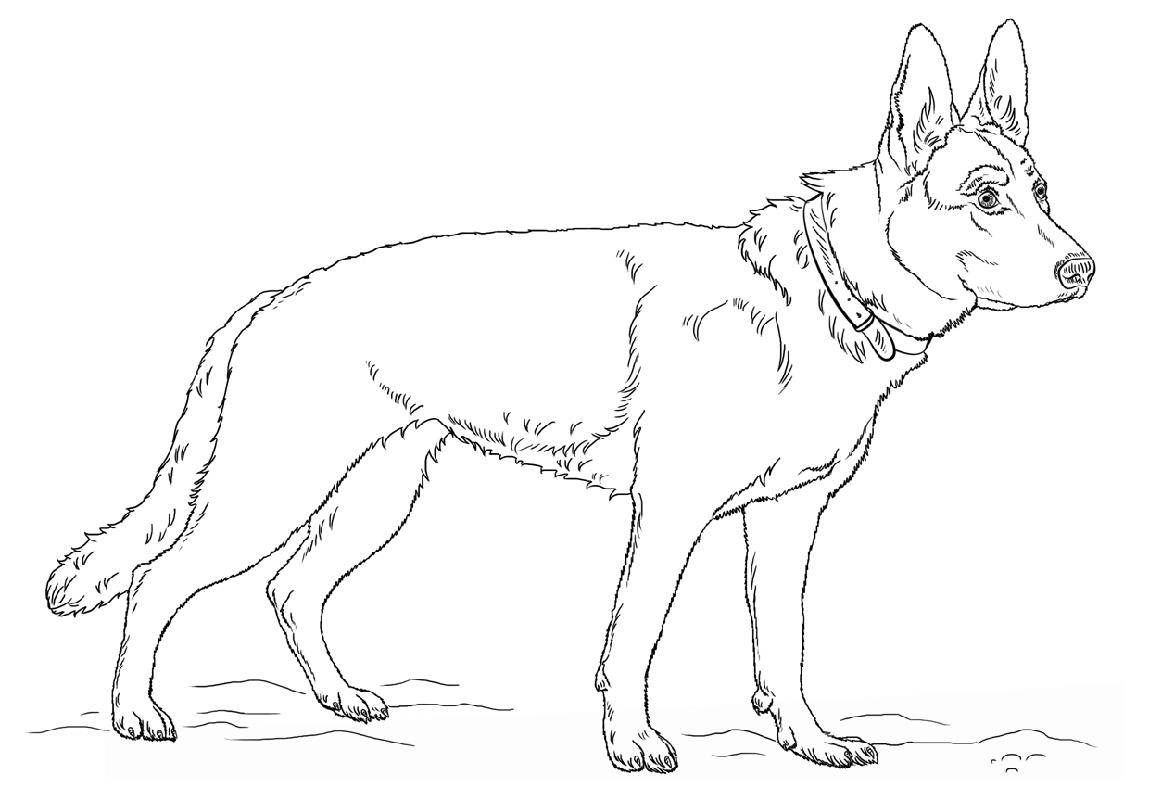 german shepherd coloring pages 1