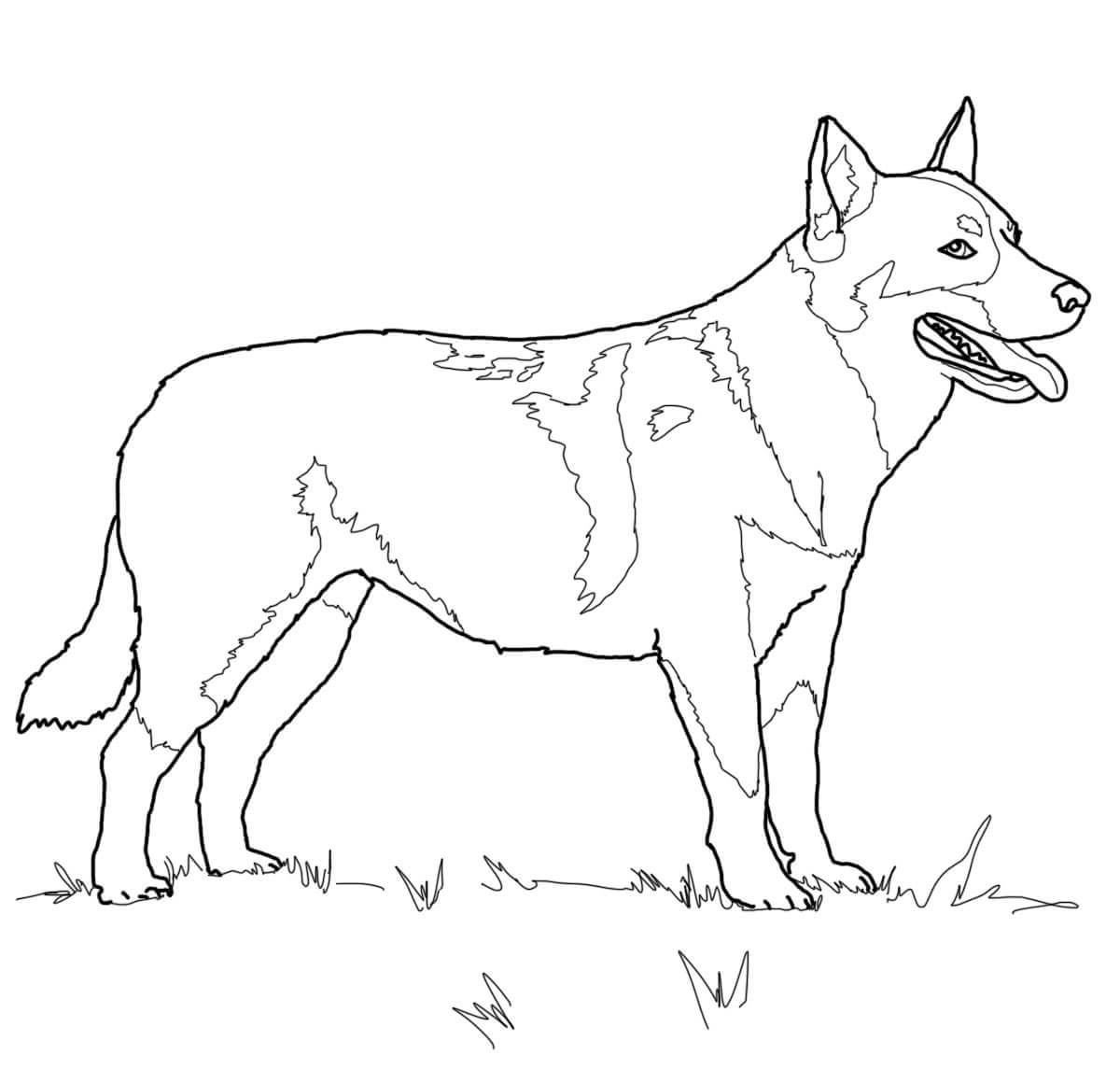 german shepherd coloring pages 4