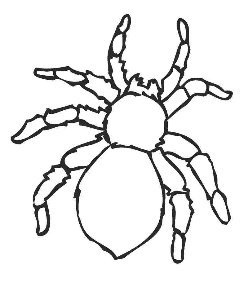 spider coloring pages four