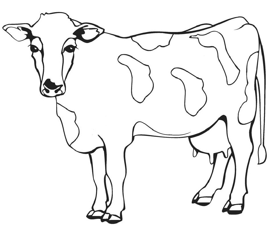 cow coloring pages 5