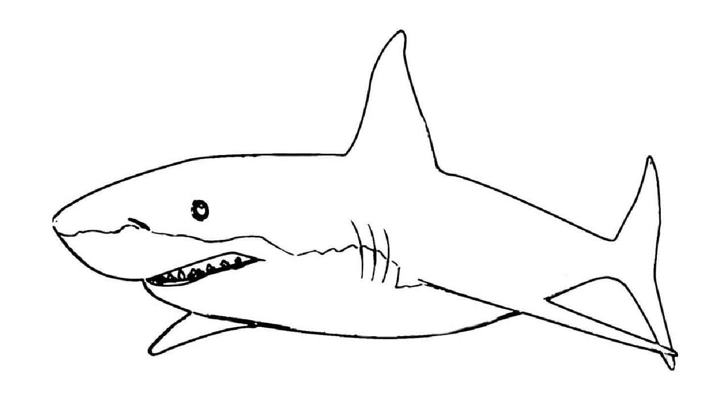 shark coloring pages 3
